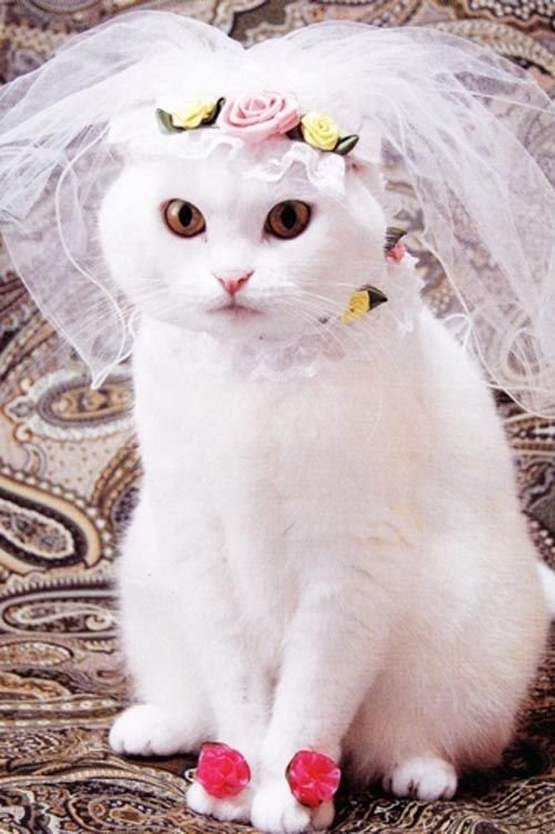Its a nice day for a cat wedding talking wed its a nice day for a cat wedding junglespirit Images