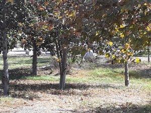 Compton Creek Natural Park