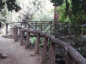 Elope on Ferndell Hiking Trail